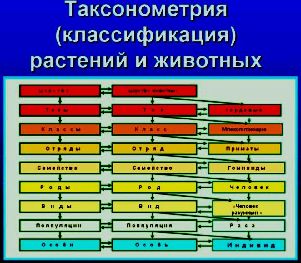 Таксонометрия-фотосхема